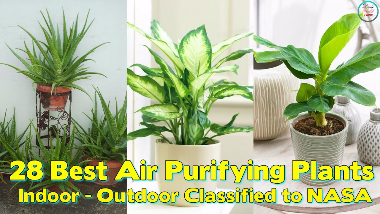 Best Air Purifying Plants For Indoor Outdoor Clified To Nasa