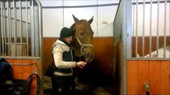 Hevonen ja lääkeruisku