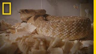 The Snake Room | Snake Salvation