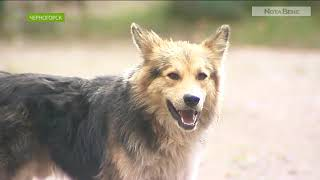 В Черногорске мальчика спасли от бродячих собак