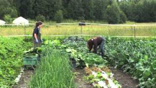 Mat-Su Farm Tours: Kenley's Alaskan Vegetables