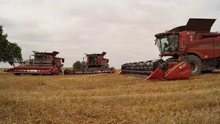 Wielkie żniwa w Gospodarstwie rolnym Wojnowo | 7x Case |