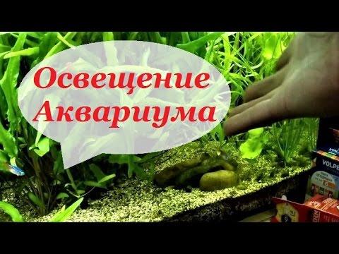 Освещение аквариума. Свет в аквариуме. Для растений.