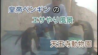 天王寺動物園の皇帝ペンギンの餌やりです。 一匹だけ離れてるのは現在、...