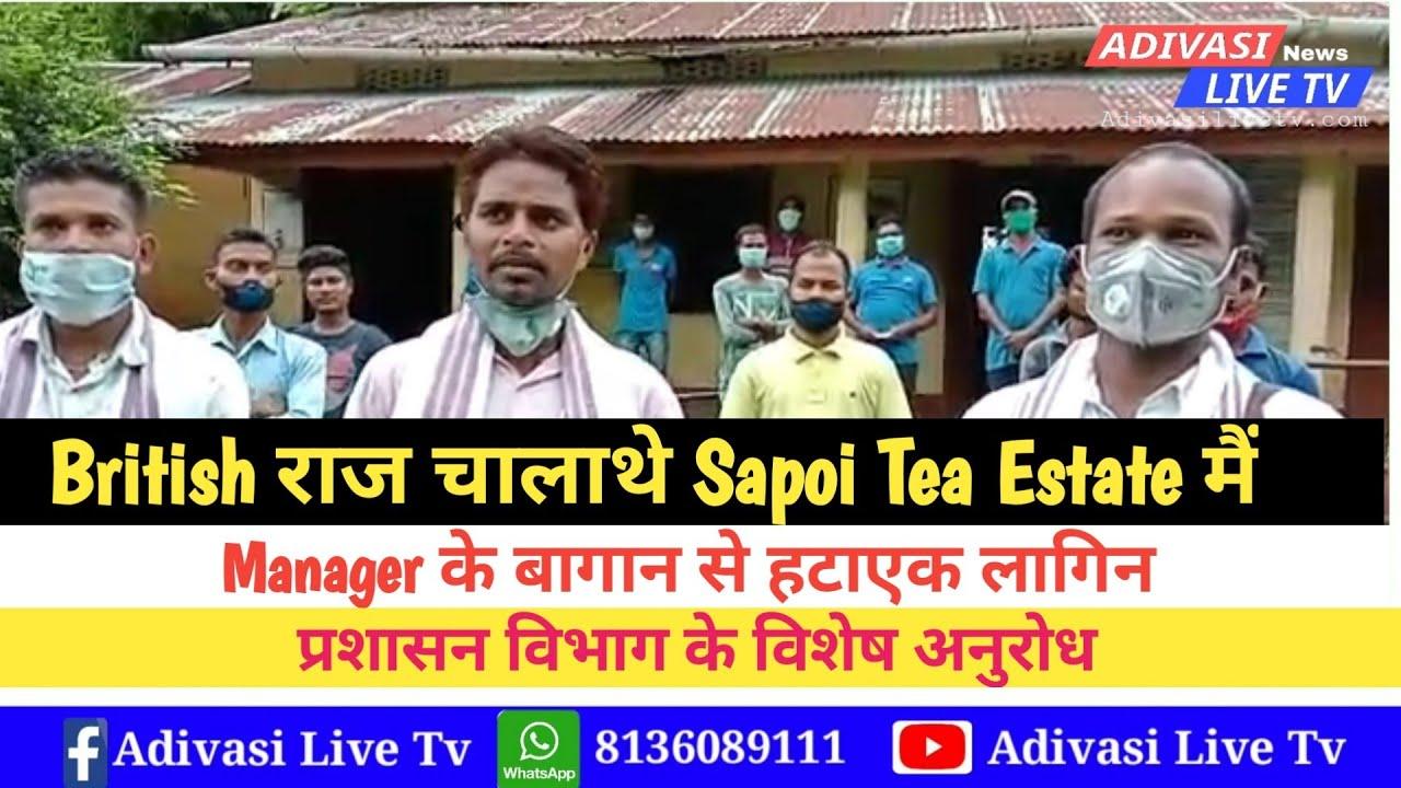 British राज चालाथे Sapoi Tea Estate मैं // AASAA Sonitpur District Exclusive Report //