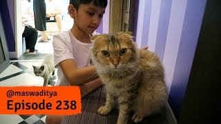 Cat Cafe Harajuku thumbnail