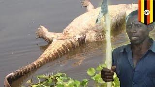 الزوج ينتقم من التمساح الذي أكل زوجته الحامل بالشهر الثامن
