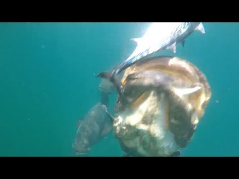 Fishing Offshore Giant Fish Go Crazy