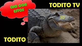 Video LOTTO ACTIVO DATOS EXPLOSIVOS PARA HOY MIERCOLES 03-01-2018 RULETA ACTIVA, GRAN RULETA download MP3, 3GP, MP4, WEBM, AVI, FLV Juni 2018