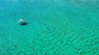 Florida Shark Migration by Drone!!! | DJI Mavic Pro | Amazing 4K Footage