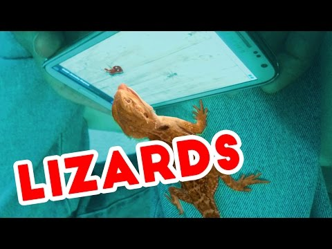 Thumbnail: Funniest Lizard & Reptile Blooper & Reaction Videos of 2016 Weekly Compilation | Funny Pet Videos