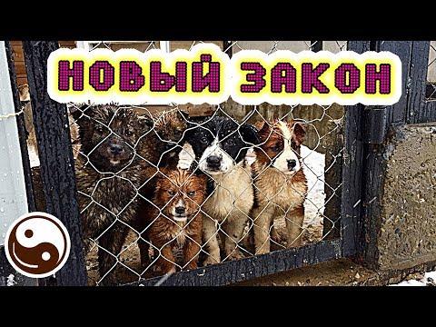Вопрос: Каких животных могут запретить держать дома в России в 2020 году?