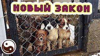 Разбор: ЗАКОН О ЖИВОТНЫХ в России