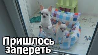 VLOG: Почему мы заперли собак? /  Регине месяц / Клим порезал палец / Про пластику носа