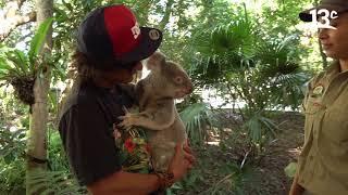 Oceanía | Compartiendo con un koala en Brisbane (Australia)
