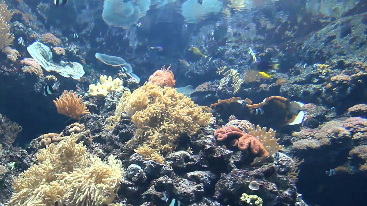 Aquarium De Paris Canon Eos 550d