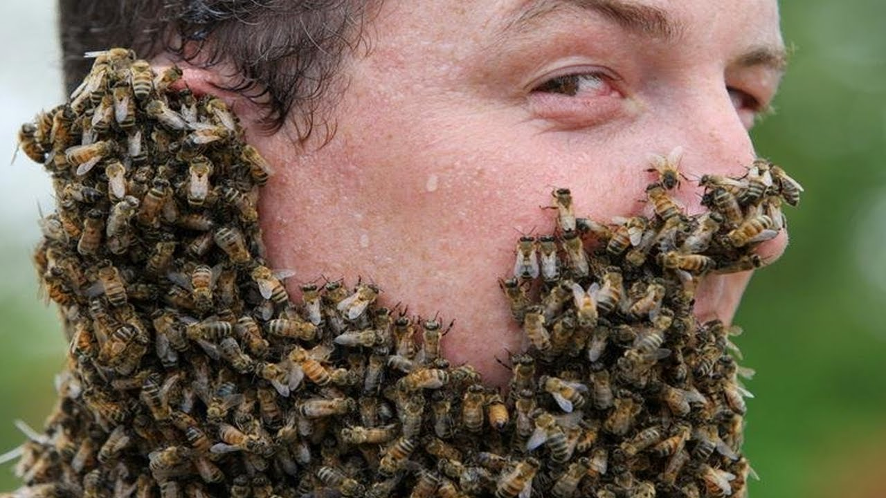 how to get rid of bees around my house