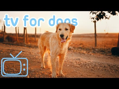 TV for Dogs! How to Calm My Dog TV and Relaxing Music! [TESTED]