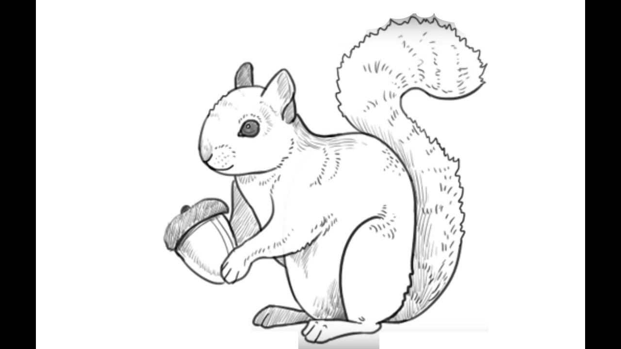 Line Drawing Squirrel : How to draw a squirrel Как нарисовать Белку youtube