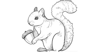 How to Draw a Squirrel/Как нарисовать Белку(How to draw a cute Squirrel. Easy drawing tutorial for kids., 2016-03-04T09:06:59.000Z)