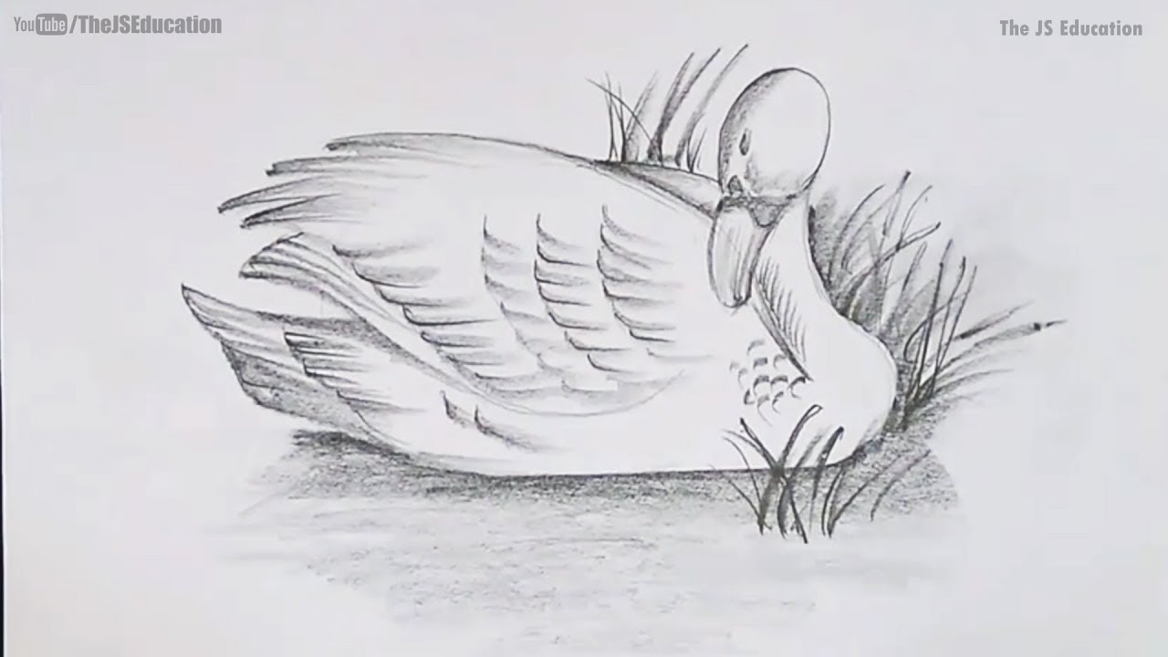 How To Draw A Bird With Shading Easy And Step By Step Youtube