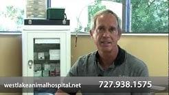 Westlake Animal Hospital - Short | Tarpon Springs, FL