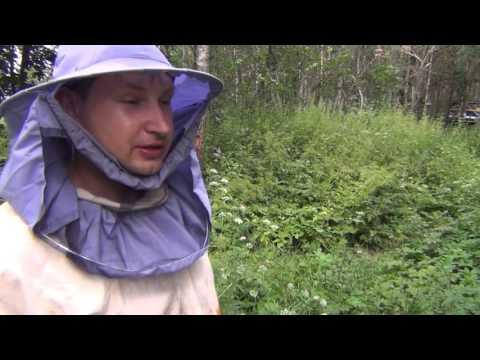 Ловля щуки в августе: Где и как ловить щуку в августе