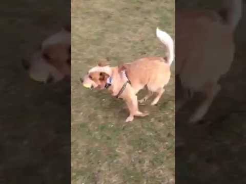 ACDRA foster dog Wrangler - 1 of 2
