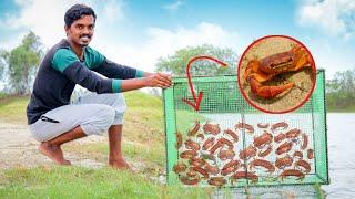 Oh!! நண்டு இப்படித்தான் பிடிக்கணுமா | Biggest Crab Trap Making | Crab Catching