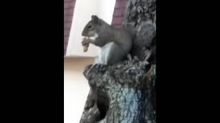 Las ardillas(2)