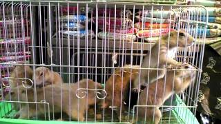 Chungyechon Pet Market in Seoul, South Korea by bassexpander