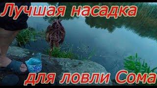 Лучшая насадка для ловли Сома. Catfish