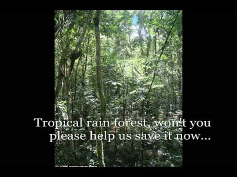 The Rain Forest Song