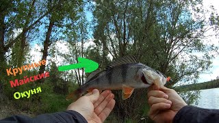Рыбалка на Реке Северский Донец Попал на упитанных Окуней