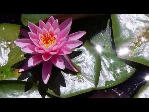 Клип Secret Garden - Lotus
