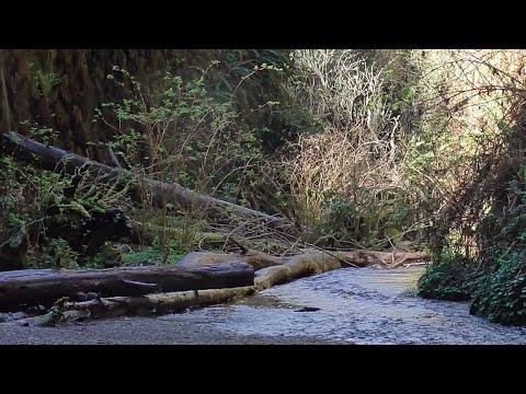 Redwoods 2018: Rachel Carson Academy CHS
