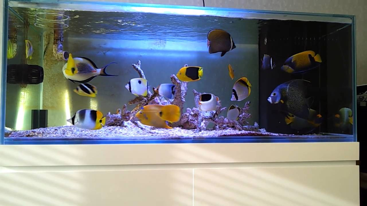 Fish only saltwater aquarium 120 gallon youtube for Marine fish tanks