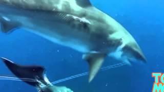 Дайвер снял видео, на котором акулы поедают мёртвого кита(, 2015-02-01T04:59:35.000Z)