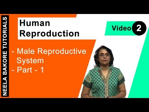 Human Reproduction - Male Reproductive System - Part - 1