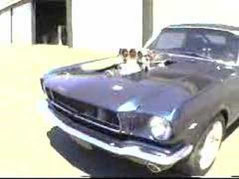 1967 Mustang Fastback >> Supercharged 1965 Mustang burnout - YouTube