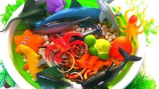 Learn Wild Zoo Animals Names Safari Education Sea Creatures For Kids