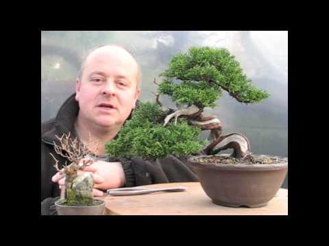 Shohin Bonsai Demonstration by Graham Potter