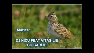 VITAS- LIE CIOCARLIE(DJ NICU REMIX)