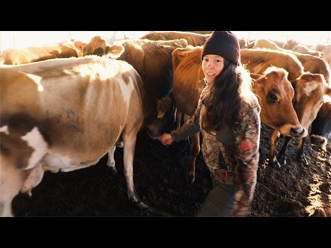 the Dairy Cows at Full Circle Farm