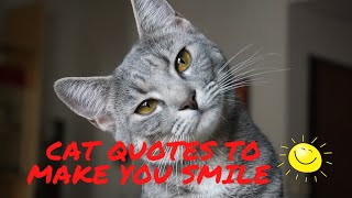 Funny cat quotes - this short video will make you smile.