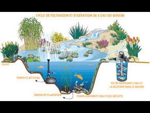 creer son bassin d ornement bassin de jardin avec filtration naturelle