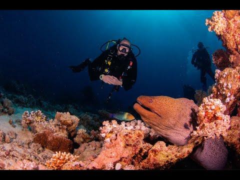 scuba diving arde grăsime
