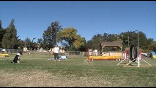 Dog Agility Training 'tips' - Obstacle Discrimination