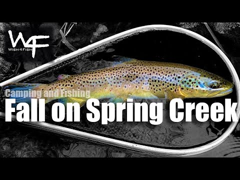 W4f camping and fishing fall on spring creek pa for Spring creek pa fishing report