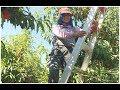 Trabajadora De Campo | La Vida De Una Joven Madre Soltera | Latinos En Estados Unidos video